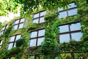 Green Fassade